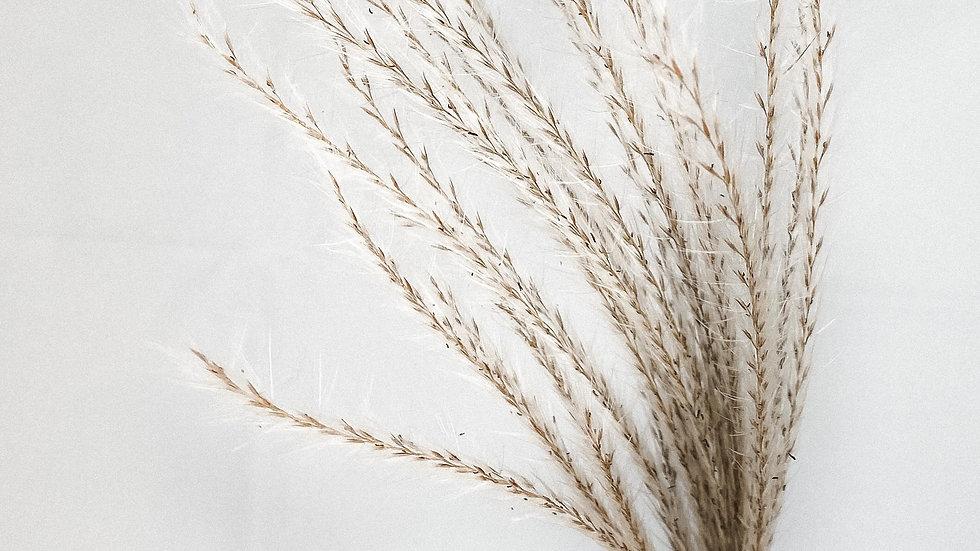 Silver Gras