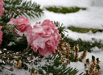 cemetery-flowers-500341.jpg