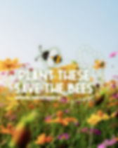 Plant_These_Save_Bee_Campaign_2020_Stein