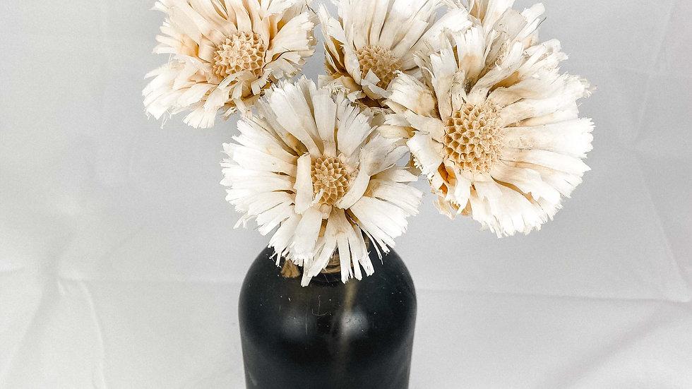 """Repens Blüten """"Weiß"""""""