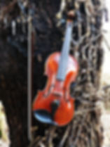 Violino 5 corde | 5 string fiddle | Feltre (BL)