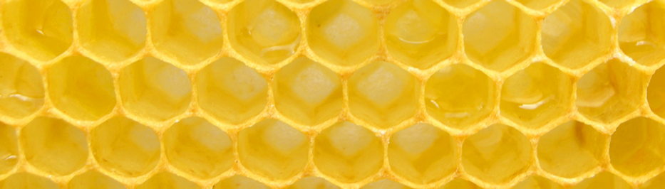 A5379 bee pic 2.png