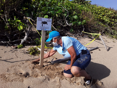 Community Spotlight: Volunteer Leaders of the DUNAS Project Help Protect Sea Turtle Nesting Sites