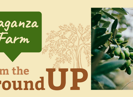 From the Ground Up: A Profile on Laganza Farm