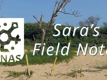 Sara's Field Notes: Mi experiencia con Exploradores de DUNAS