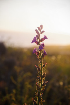 Súper floración (Superbloom)