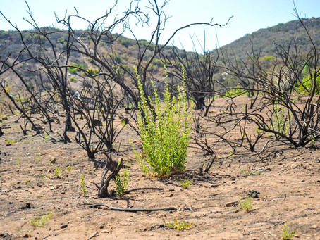Ecosystem Transformation After a Large Scale Disturbance: Virtual Workshop Series