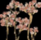 Buckwheat2_SDCEcoAssess.png