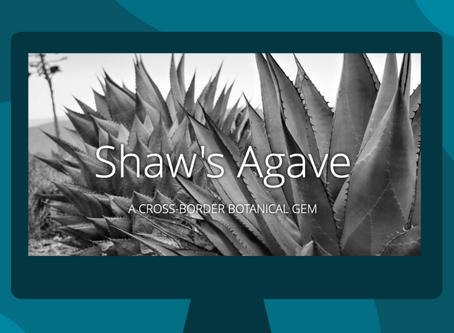 Shaw's Agave: A Cross-border Botanical Gem