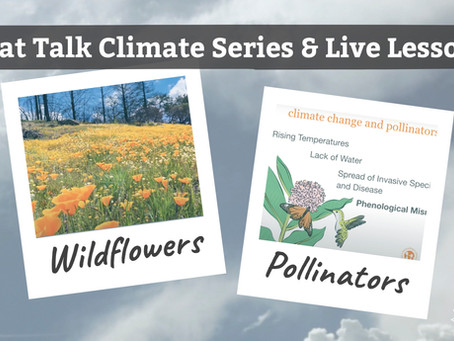 Nat Talk Climate Series and Live Lesson: Wildflowers and Pollinators