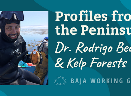 Profiles from the Peninsula: Dr. Rodrigo Beas & Kelp Forests