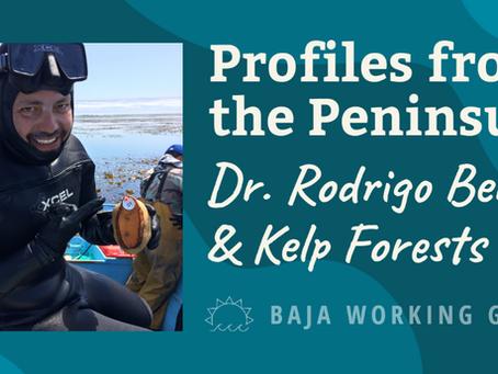 Profiles from the Peninsula: Dr. Rodrigo Beas & Kelp Forests