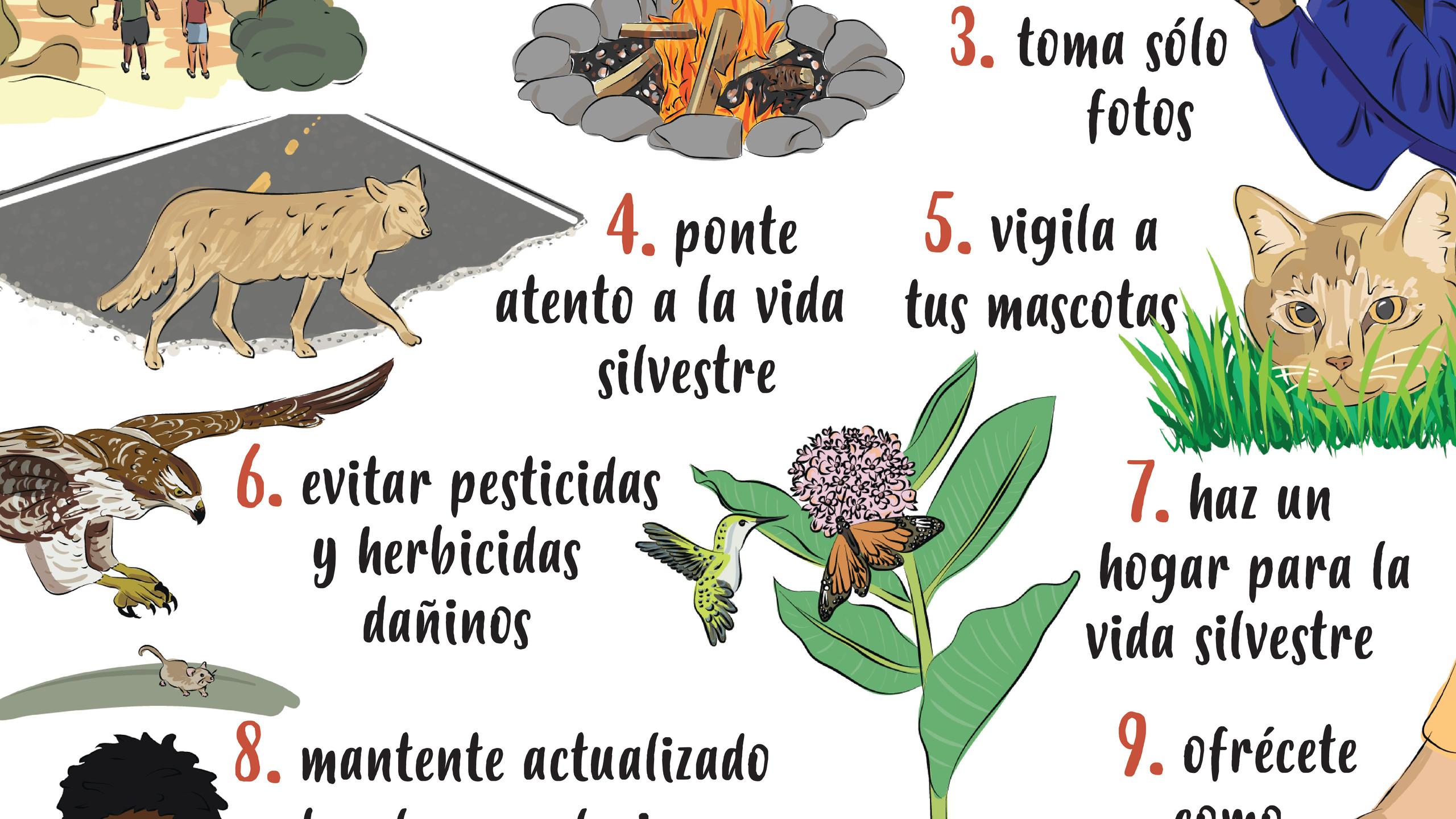 10 Things Wildlife Poster 2.4 Spanish
