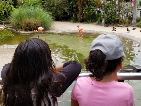 Tribal Youth from the San Pasqual Band Learn about Watersheds and Impacts at the San Diego Zoo