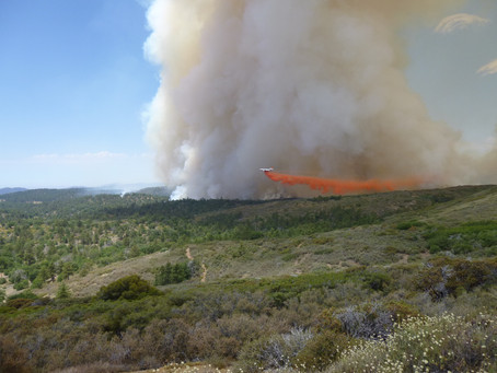 """Dr. Megan Jennings Presents """"Wildfires: A Tale of Two Backcountries"""" for SDNHM's Nat Talk"""