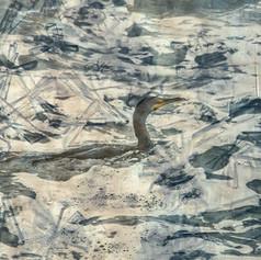 Bird in the Surf