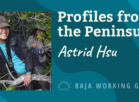Profiles from the Peninsula: Astrid Hsu