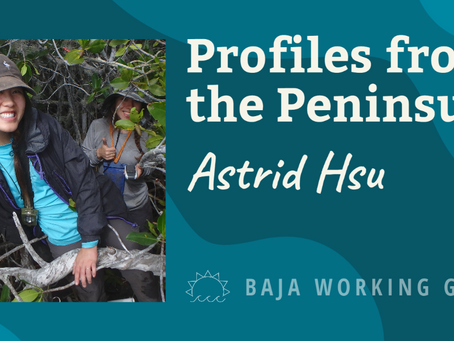 Profiles from the Peninsula: Astrid Hsu