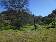 oak grassland.JPG