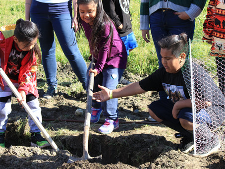 Climate Kids Plant Trees with Solidarity Farms