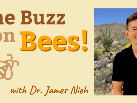 The Buzz on Bees! A Q&A with Dr. James Nieh