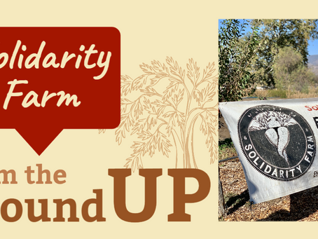 From the Ground Up: A Profile on Solidarity Farm
