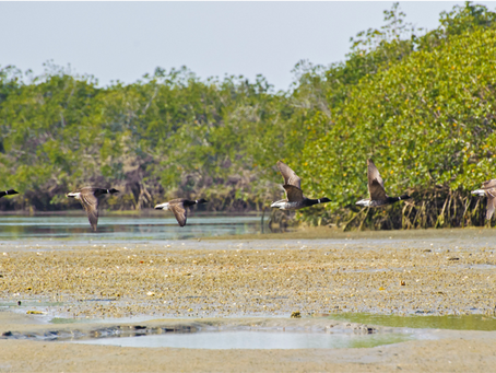 Mangroves and Pathways to Science - USD Guest Lecture