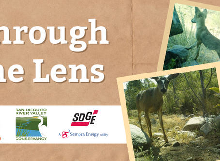 """SDG&E Funds """"Through the Lens"""" Collaboration with San Dieguito River Valley Conservancy"""