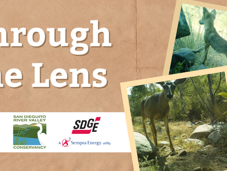 "SDG&E Funds ""Through the Lens"" Collaboration with San Dieguito River Valley Conservancy"