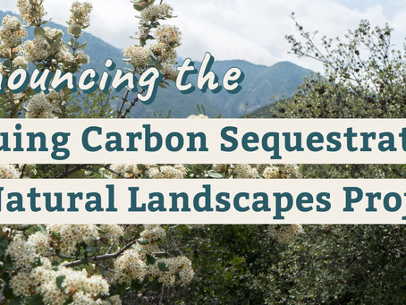 Climate Science Alliance Announces New Collaboration on Carbon Sequestration