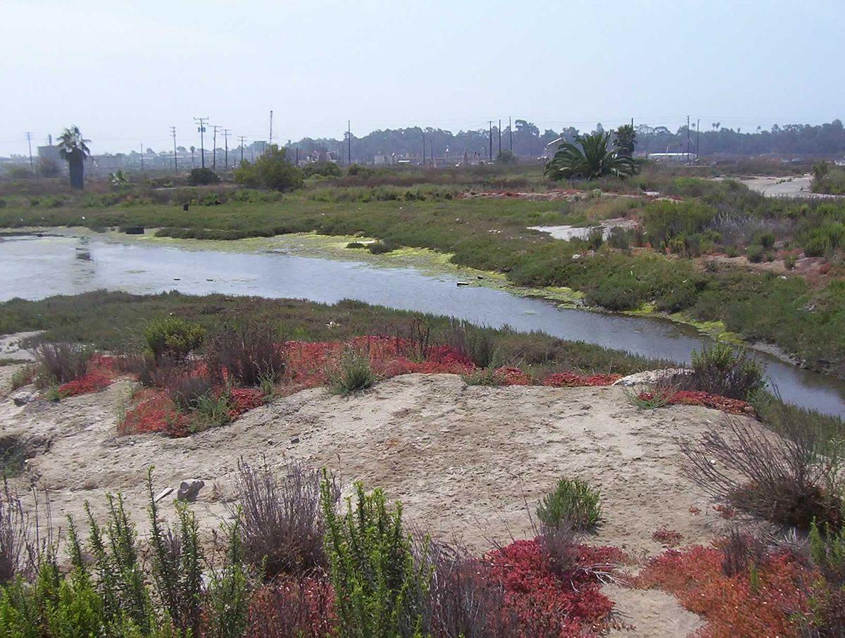 Los Cerritos Wetland