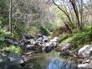 riparian habitat.jpg