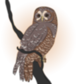 CAOwl_colorpop.png