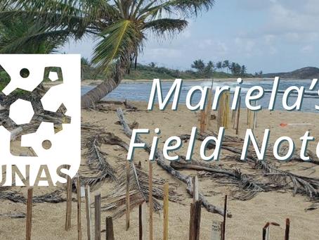 Mariela's Field Notes: Censo de vegetación y Fauna en Duna #2
