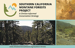SouthernForestsPresentation_Draft4 - bil