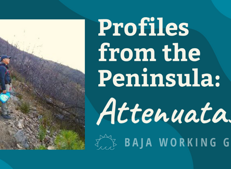 Profiles from the Peninsula: Attenuatas
