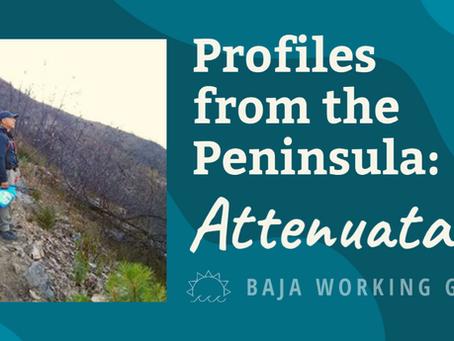 Profiles from the Peninsula: Attenuatas