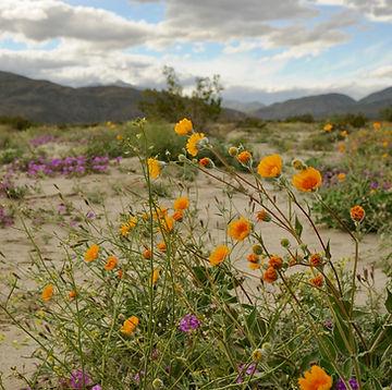 desert_bloom.jpg