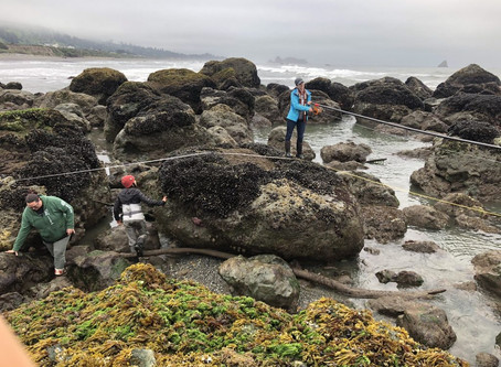 Tribal Intertidal Digital Ecological Surveys (TIDES) Info Session, This Saturday!