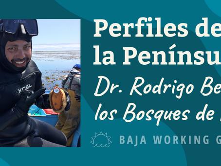 Perfiles de la Península: Dr. Rodrigo Beas y los Bosques de Kelp