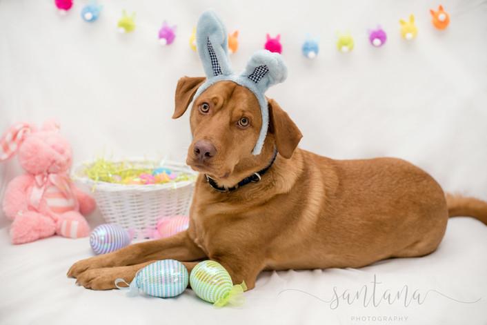 Easter Mini's!