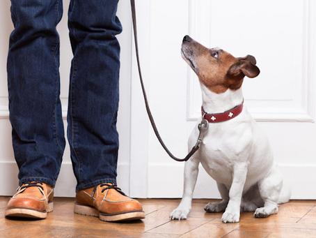 Restrição de circulação de pets em áreas comuns dos condomínios pode ser contestada pelo Judiciário