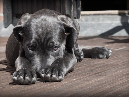 Abril Laranja alerta para maus-tratos contra animais