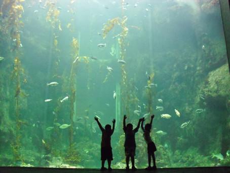 Peixes podem ajudar no tratamento de crianças autistas