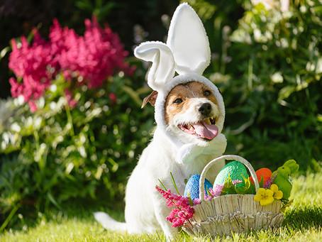 Lojas Petz vendem ovos de páscoa especiais para cães e gatos