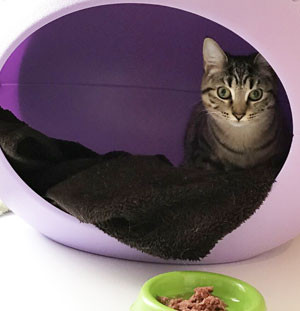 Happy-Cat_Coxford-Down-Cattery_image03.j