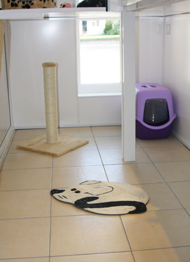 Cattery-Suite-5.jpg