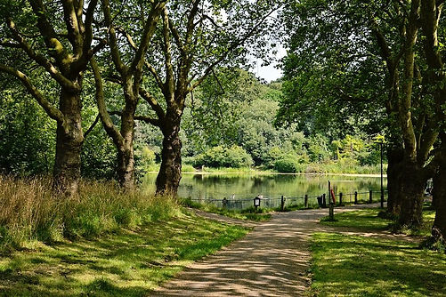 Foto fuer Website Hampstead_Heath.width-