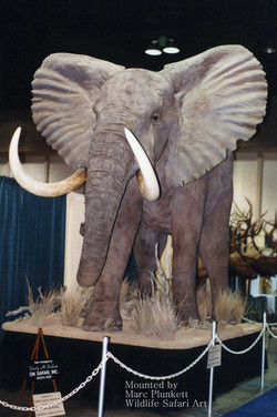 elephant048