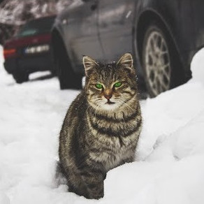 Cats and Roads Winter Care